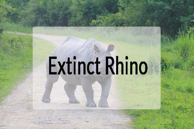Extinct Rhinos – Which Species of Rhino is Extinct?