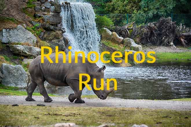 How Fast Can Rhinos Run – The Wild Rhino Chase