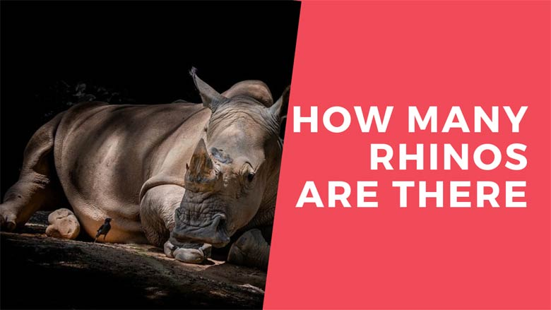 how many rhinos are there in the world