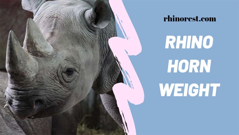 how much does a rhino horn weigh