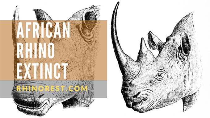African Rhino Extinct – Conservation Efforts Taken