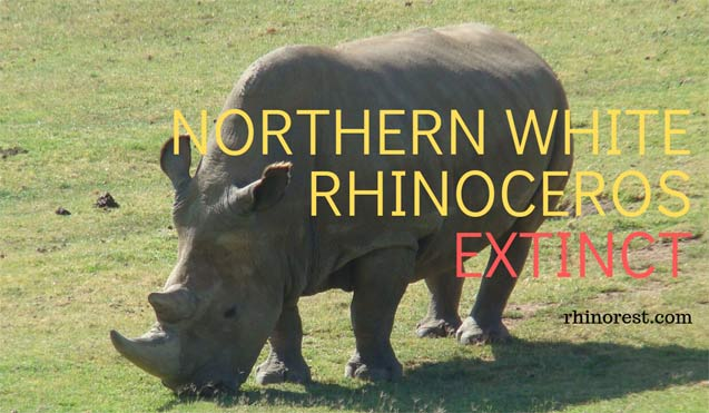 Are the Northern White Rhinoceros Extinct?