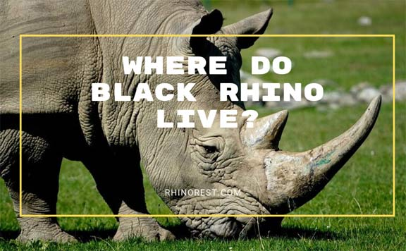 Where do Black Rhino Live -Black Rhinoceros Habitat