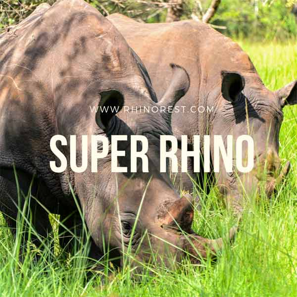 Super Rhino (2009) — What Animal is Rhino in Bolt?