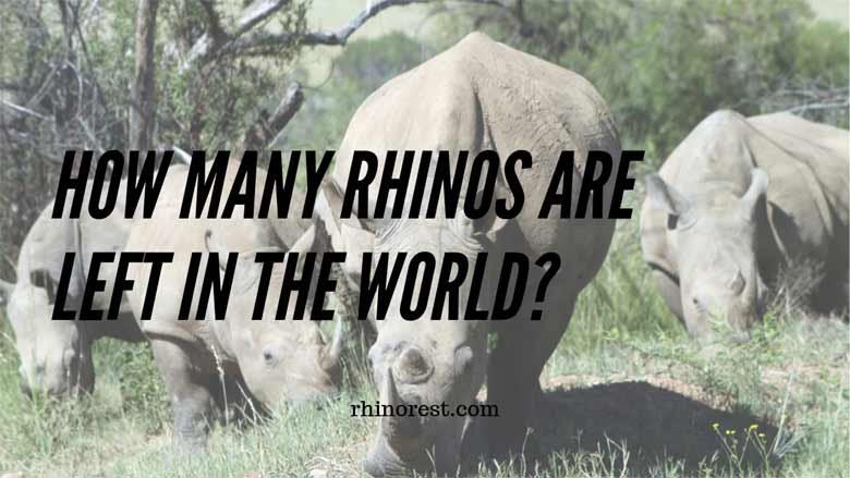 rhinos are left in the world