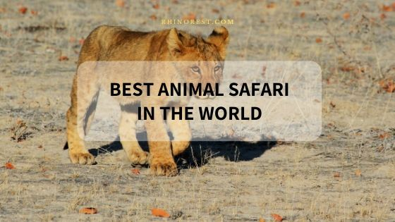 20 Best Animal Safari Adventures in the World