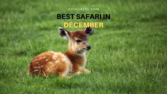 What is the Best Safari in December?