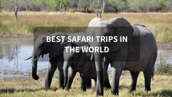 16 Best Safari Trips in the World at Low Cost