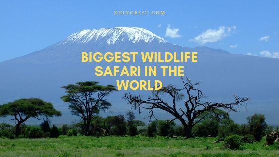 What is the Biggest Wildlife Safari in the World?