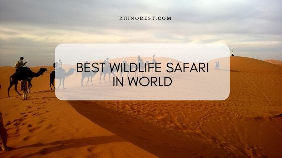 What is the Best Wildlife Safari in World?