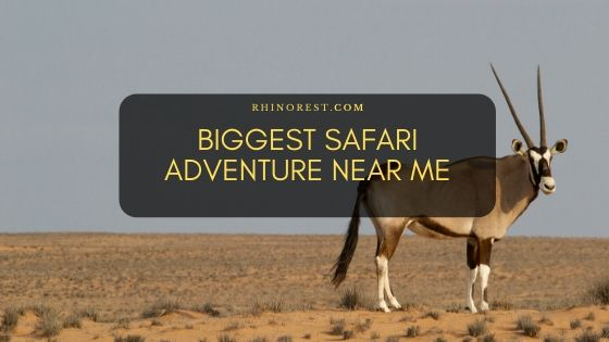 17 Biggest Safari Adventure Near Me