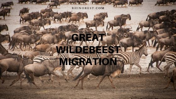 Best Time to Experience a Great Wildebeest Migration
