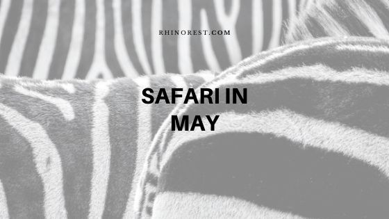 How to Decide the Best Safari in May?