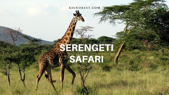 What You Must Do to Complete a Serengeti Safari?