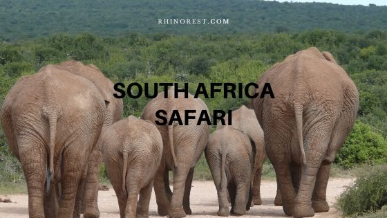 10 All time Thrilling South Africa Safari Tours