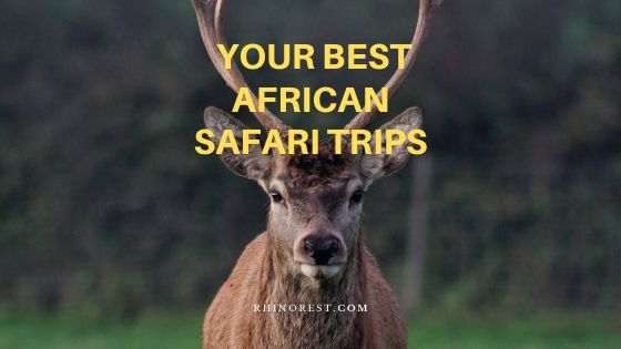 How to Pick Your Best African Safari Trips