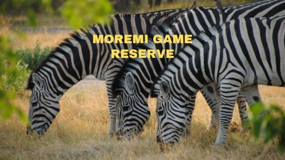 Moremi Game Reserve Safari Guide and Stay
