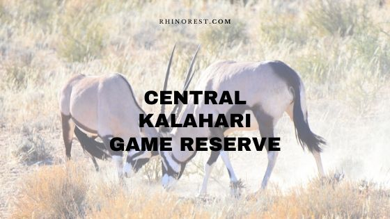 Central Kalahari Game Reserve Safari Plan