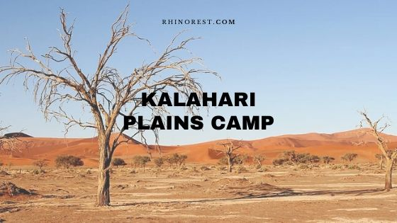 Kalahari Plains Camp Review | Costs | Best Time
