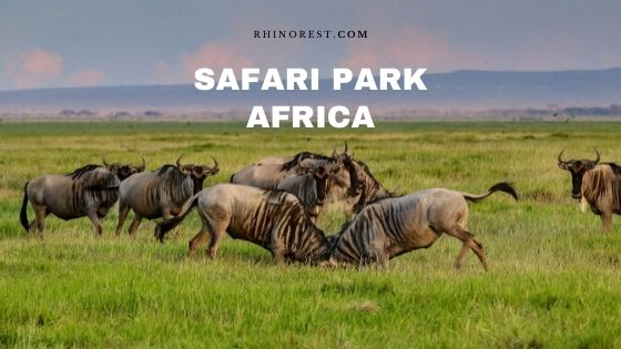Safari Park Africa of All-time for Magnificent Trips