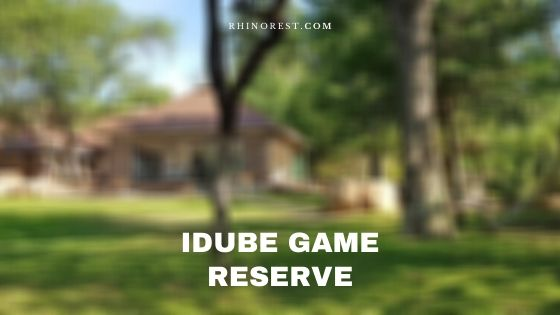 Idube Game Reserve – Review | Features | Highlights