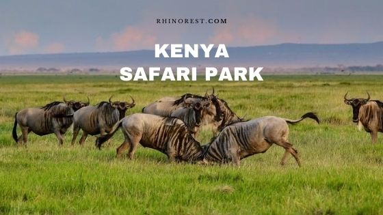 18 Kenya Safari Park Destinations – Top Rated in Reviews
