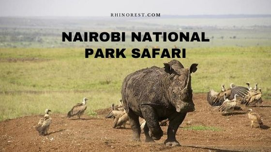 Nairobi National Park Safari – Travel Plan | Reviews