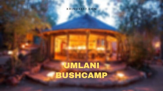 Umlani Bushcamp – Reviews | Amenities | Highlights