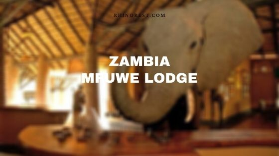 Zambia Mfuwe Lodge – Amenities | Reviews | Rooms