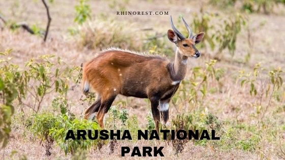 Arusha National Park Tanzania – Wildlife | Location | Safari