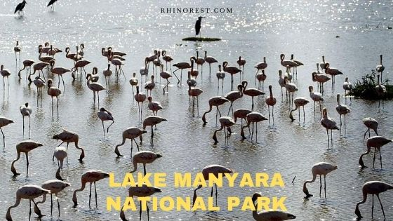 Lake Manyara National Park Tanzania – Safari | Activities