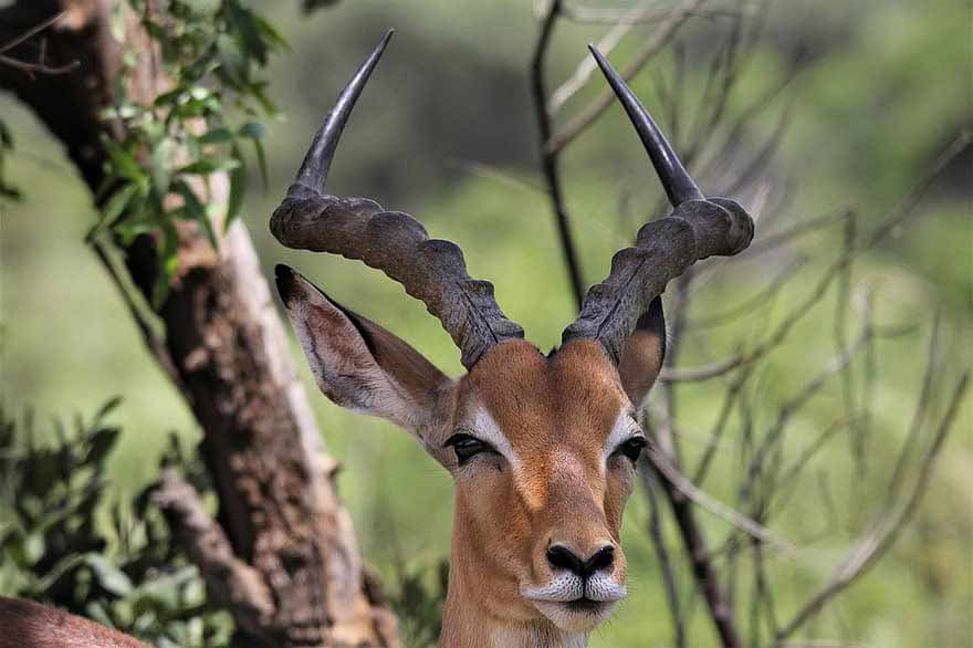 22 Unique African Animals with Beautiful Horns