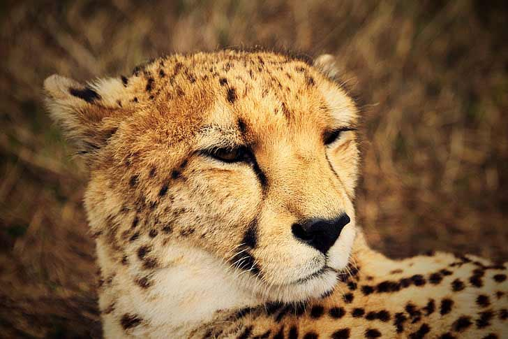 40 Big Five Animals Facts for African Safari and Wildlife Lovers