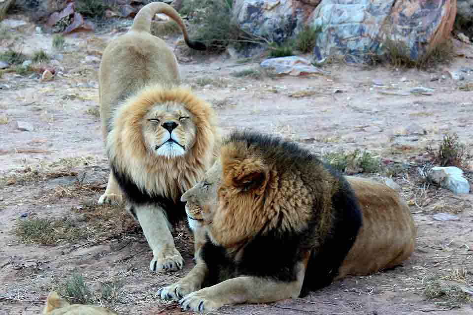 53 Crazy Facts About Gorgeous Big 5 African Animals