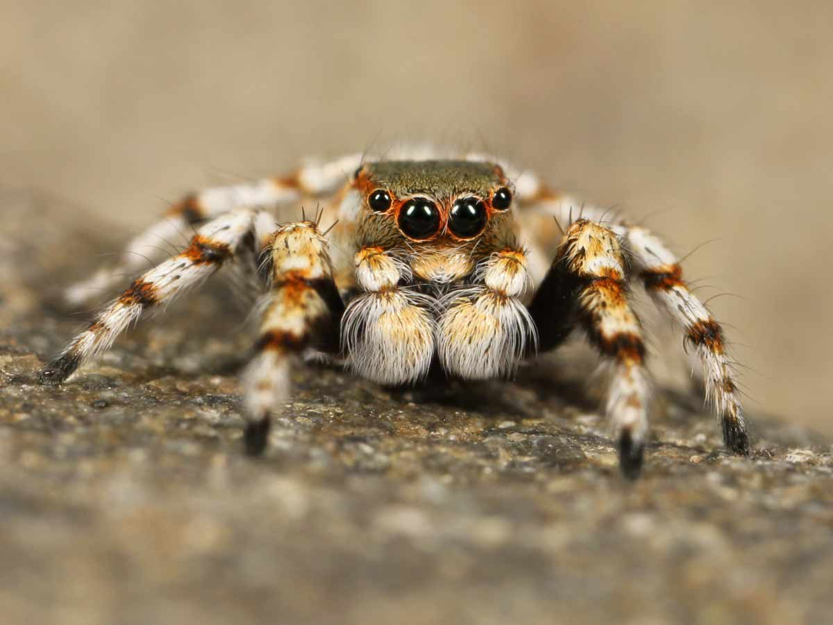 amazing facts about spiders