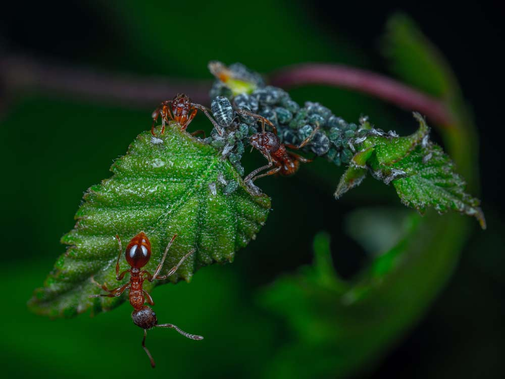 fun facts about ants for preschoolers