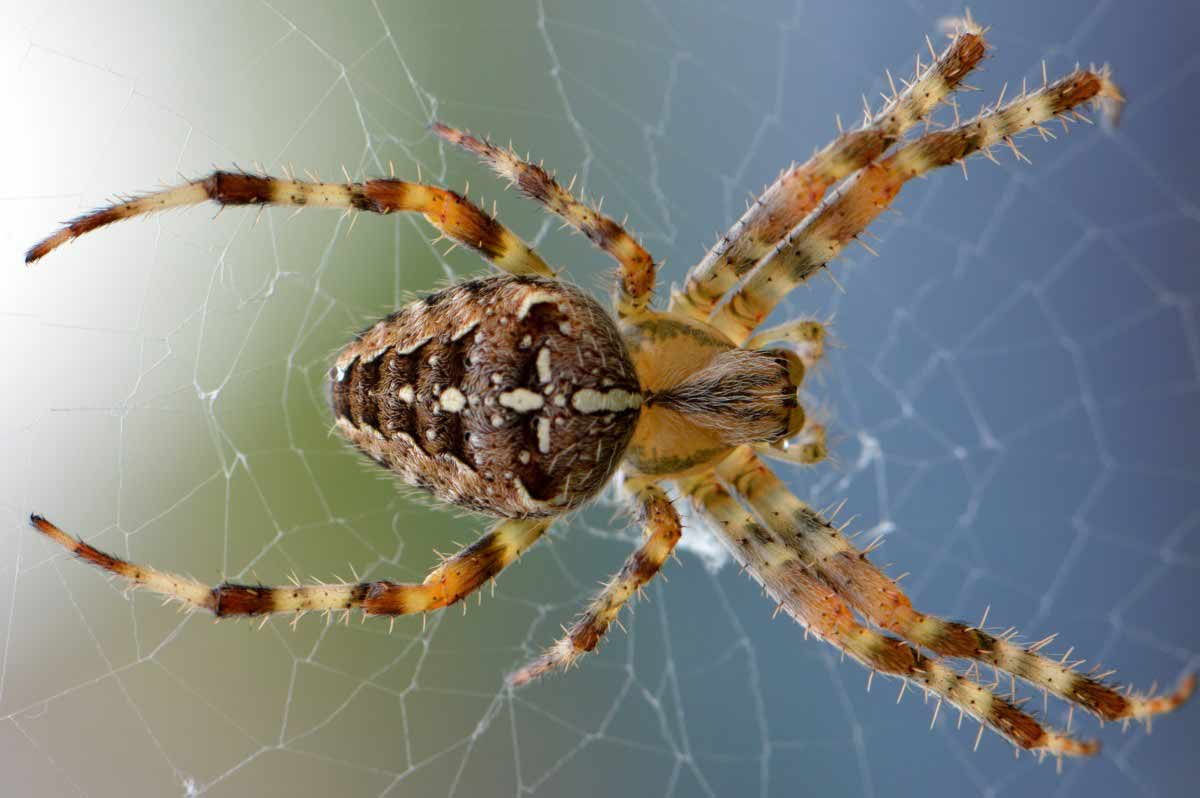 interesting spider facts